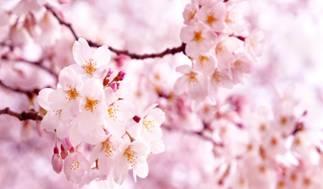 Майские праздники в Корее