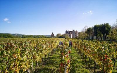 Туры в винные регионы Франции